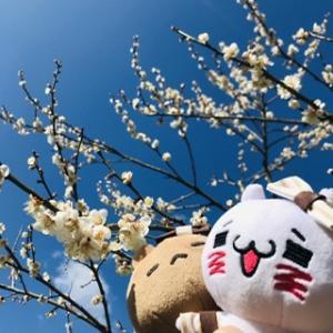七折梅祭に行ってきました( ᐢ˙꒳˙ᐢ )♡