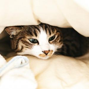 眠くなるまで布団に入らない。