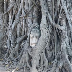アユタヤ遺跡を探訪!14世紀から400年続いたタイの中心地!世界遺産にも登録!(後編)