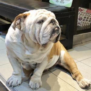 タイで見つけた犬&猫ベストテン!(後編)