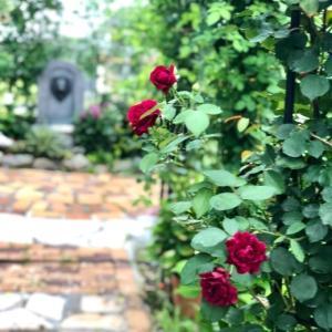 バラ越しに見える風景♡