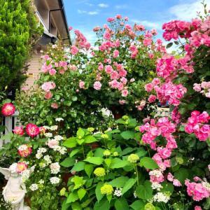 つるバラの誘引剪定♡ホーム&ガーデンと、レストランの食事風景♫