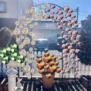 つるバラの誘引剪定♡ソフィーロシャス♫とブリーズパルファン^^
