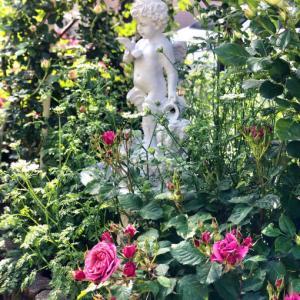 主人からの母の日のプレゼント♫と咲いているバラ達♡