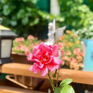待ちに待ったお花が咲いた〜♫と、主人のひとこと(・∀・)