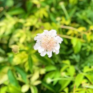 除草剤被害のバラ達のその後( ;  ; )と青空にオデッセイア♡