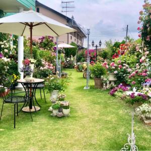 ブログでオープンガーデン2021②〝ボウウィンドウ前ベンチ周辺のバラ達〟♡