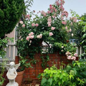 ホーム&ガーデンの2番花♡と、ルリタマアザミ♫