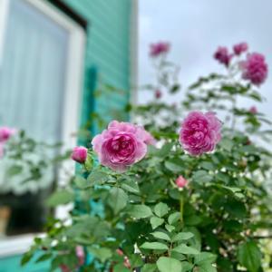 土が悪い庭におススメ〝バラのレイズベッド風〟