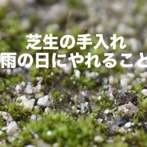 【更新作業】芝生の手入れ|雨の日にやれること
