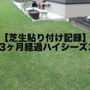 【芝生貼り付け記録】#9|3ヶ月経過ハイシーズン突入