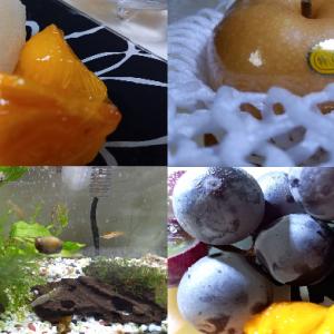 秋の旬のフルーツ~梨|柿|巨峰~💖