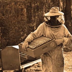 蜂の巣箱にAI技術搭載