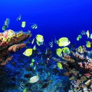 巨大なサンゴ礁が、オーストラリアで発見される