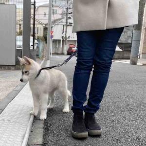 お散歩デビュー🚶♀️
