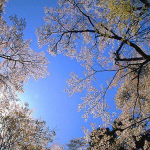 新型肺炎感染者が北海道で一番多い理由は?