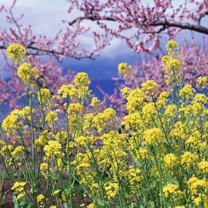作物が作れる土(畑)になったことを知らせてくれる「草たち」がいます。
