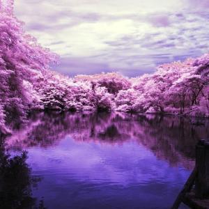 日本アビオニクス信用買い! 今週の取引記録(2020年5月29日)