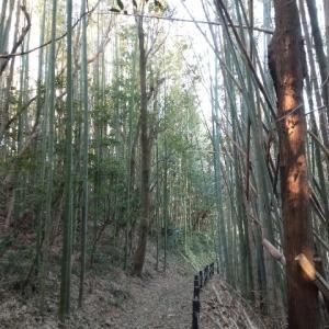 【下総神崎】こうざき自然遊歩道の続き
