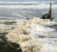 【自然】オランダで「波の花」に雪崩のように巻き込まれサーファーが5人死亡