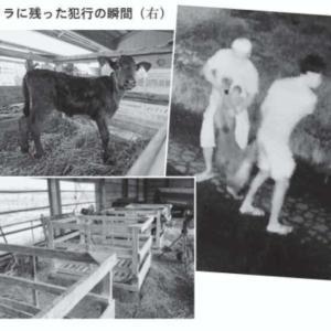 【逮捕13人】群馬県などの家畜840頭窃盗でベトナム人13人逮捕
