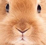 【画像】うちのウサギさん、見せてやるよ