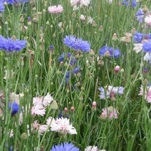 畑の中の花畑。「お花をどうぞ。蜜もどうぞ」