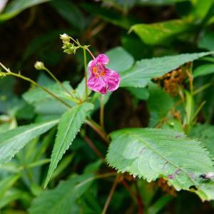 季節の草花5種