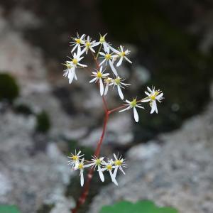 季節の草花3種