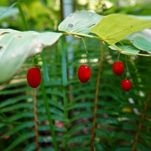 季節の草花2種
