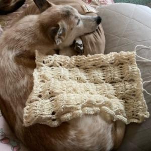 編み物とひざ猫とミス・マープル