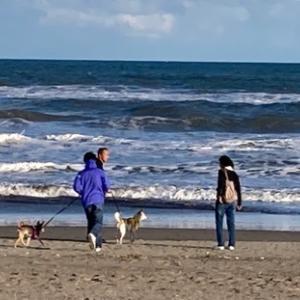 みんなで海に行きました