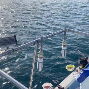 コマセ真鯛乗っ込み本番