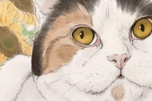 【イラスト】猫のイラストを投稿する専用アカウント設置!