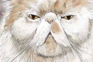 【イラスト】猫:アム