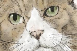 【イラスト】猫:あうーん