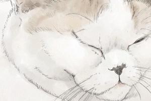 【イラスト】猫:あんみつ