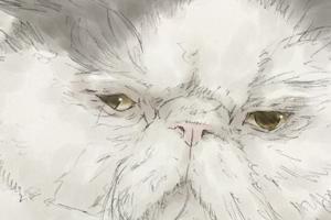 【イラスト】猫:福助ちゃん【似顔絵】