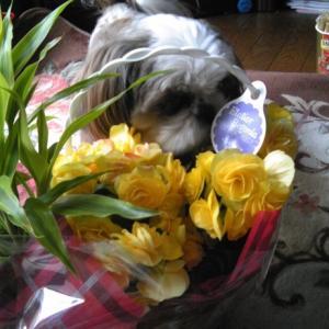お家でお花見♪