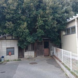 柏市某所…住宅街にひっそり潜む木々に覆われた廃屋…