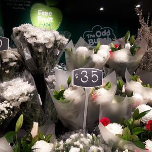 オーストラリアのあるある 菊の花束編