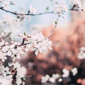 時は鎌倉、好きは平安。