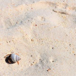 小さな砂浜とポップコーン好きな彼ら。