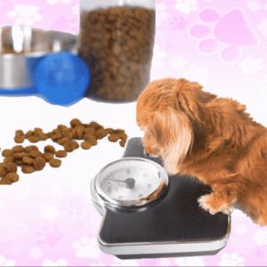 老犬用ドッグフードの量まとめ  愛犬の必要カロリーと犬種ごとの理想体重を調査