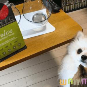 オリジンシニアドッグフードは本当に老犬におすすめなのか?原材料から栄養成分を徹底調査