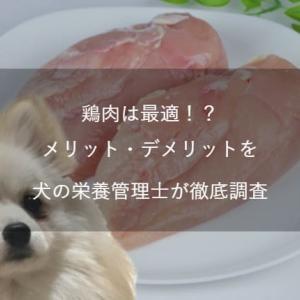 【犬の栄養管理士監修】愛犬の食事に鶏肉は最適!?栄養成分やメリット・デメリットを徹底調査