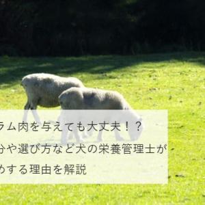 【犬の栄養管理士監修】愛犬にラム肉を与えても大丈夫!?栄養成分や選び方などおすすめする理由を解説