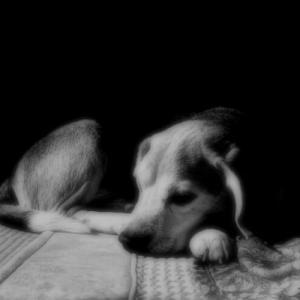 老犬の寿命の前兆?愛犬が水やご飯を飲み食いしない原因と対策
