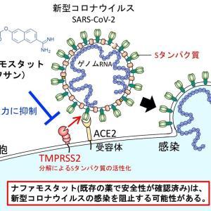 【新コロ】感染初期のウイルス侵入過程を阻止、効率的感染阻害の可能性がある薬剤を同定・東京大学医科学研究所
