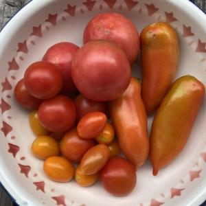 夏野菜三昧・トマト(生食用)、きゅうり、茄子の料理と保存
